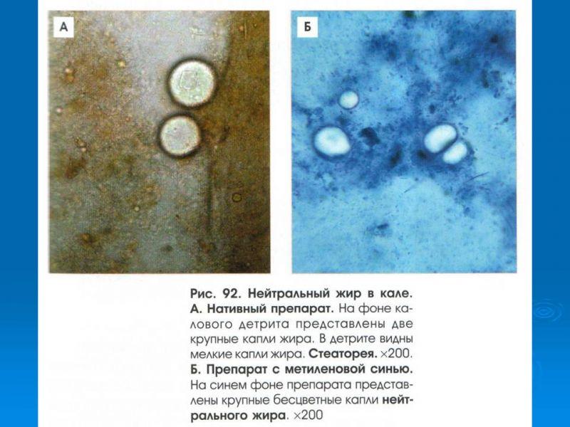 материалы способны йодофильная флора патологическая в кале у взрослого поэтому