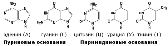 http://dendrit.ru/files/p01_61.png